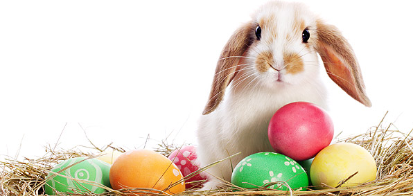 Bunny, Easter, holiday